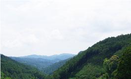 日本三大人工美林 天 竜