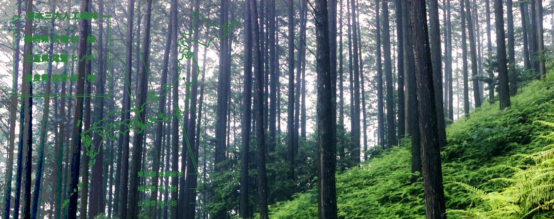 日本三大人工美林 静岡県 天竜 杉・桧、三重県 尾鷲 ヒノキ、奈良県 吉野 杉・桧
